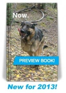 2013 Tripaws Now Pocket Planner