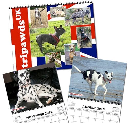 Tripawds UK 2013 Three Legged Dogs Calendar