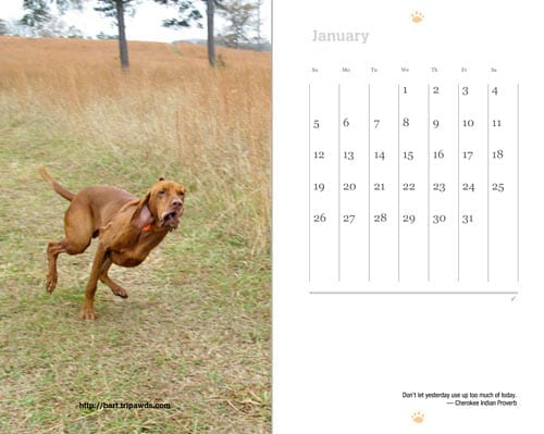 Share photos of your three legged dog or cat exercising and win a free 2013 weekly planner from Tripawds.com, the world's largest support community for animal amputees.