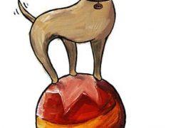 Floyd The Amazing Three Legged Circus Ball Dog