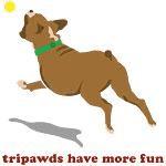 tripawd boxer fun