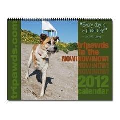 2012 Tripawds In The Now Three Legged Dogs Calendar
