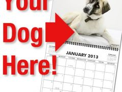 Tripawds Calendars Your Dog
