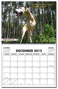 2013 Tripawds Calendar Page Nova