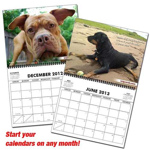 2013 Tripawds Calendar Pages