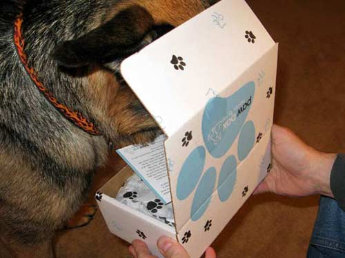 Wyatt Opens Paw Box Premium Monthly Pet Giftbox