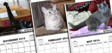 Tripawd, calendar, photo, amputee, three-legged, gift