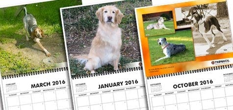 Tripawd, calendar, three-legged, dog, cat