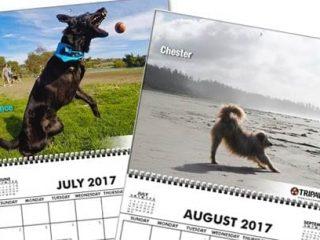 2017 Tripawds Calendars