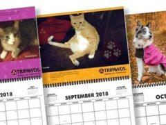 2018 Tripawds Calendar #22
