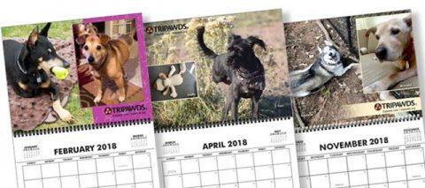 2018 Tripawds Calendar #23