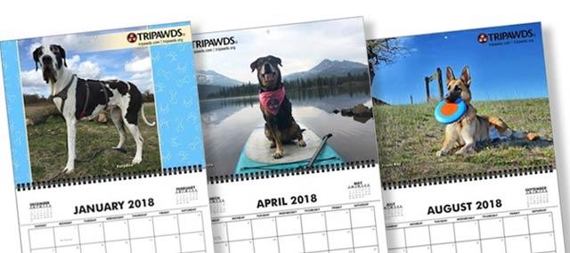 Tripawd, dog, cat, calendar