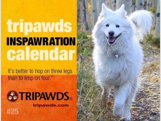 2019 Tripawds Calendar #25