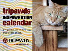 2019 Tripawds Calendar #26