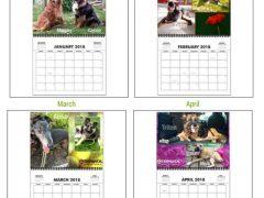 2019 Tripawds Calendar #28