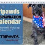 Tripawds 2020 Calendar