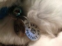 custom cat tag