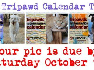 2020 Tripawds Calendar