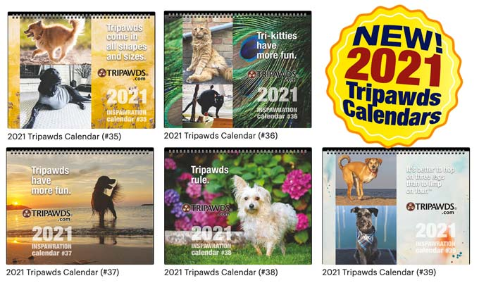 three-legged pets calendars
